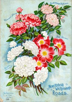 McGregor Bros., Floral Gems (1898), Back Cover; Seed Catalogs from Smithsonian Institution Libraries