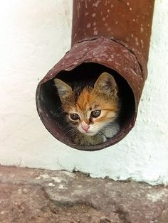Outdoor Feral Cats will find all kinds of places to feel safe and warm.