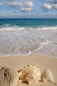 shells, beach, sea