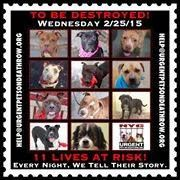 TO BE DESTROYED: 11 beautiful dogs to be euthanized by NYC ACC- WED 02/25/15. This is a VERY HIGH KILL shelter group. YOU may be the only hope for these pups! ****PLEASE SHARE EVERYWHERE!To rescue a Death Row Dog, Please read this: http://urgentpetsondeathrow.org/must-read/ To view the full album, please click here: https://www.facebook.com/media/set/?set=a.611290788883804.1073741851.152876678058553&type=3