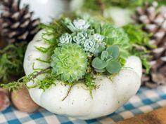 pot de plante original et déco avec plantes grasses