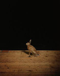 Sam Taylor-Johnson / Studio Hare