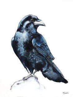 ARTFINDER: Raven by Karolina Kijak - Original watercolors of Raven Paper 300g,  100% cotton size 23x31cm  Follow me on facebook: https://www.facebook.com/kijakwatercolors