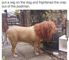 Put a wig on the dog