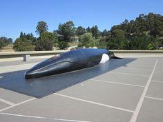 Lawrence Hall of Science- UC Berkeley - Berkeley, CA - Kid ...