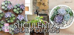 Decora tu #hogar con #suculentas aprende sobre su cuidado e #inspira para #decorar con ellas