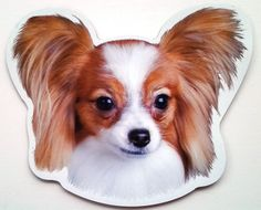 ***Papillon Magnet***Anywhere / Car Magnet | Collectibles, Animals, Dogs | eBay!