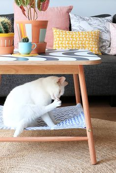 Ikea Hack for World Cat Day Styling & photography: Marij Hessel