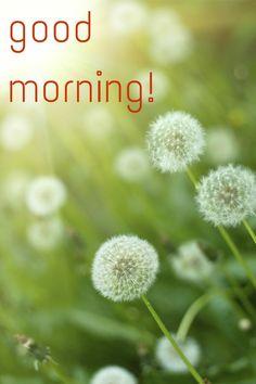 Good Morning Card for Media Dandelions