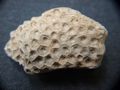 A Petoskey stone is a rock and a fossil, often pebble-shaped, that is composed of a fossilized rugose coral, Hexagonaria percarinata. The stones were formed as a result of glaciation, in which sheets of ice plucked stones from the bedrock, grinding off their rough edges and depositing them in the northwestern portion of Michigan's lower peninsula. In those same areas of Michigan, complete fossilized coral colony heads can be found in the source rocks for the Petoskey stones.