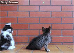 Sniper, get down!