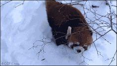 Tumblr: 4gifs:  Yeah! Snow! [video]