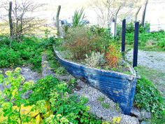 Retired canoe gets second wind as a raised herb garden!