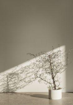 Aesthetic Backgrounds, Aesthetic Wallpapers, Bathroom Flowers, Minimalist Photography, Beige Aesthetic, Light And Shadow, Aesthetic Pictures, Wallpaper Backgrounds, Living Room Decor