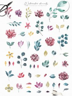 Blossoms Collection - Illustrations
