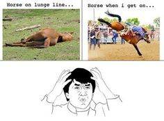 Horse on the lunge line | Horse when I get on