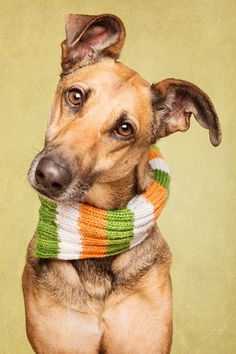 Happy St. Patrick's Day by Elke Vogelsang on 500px