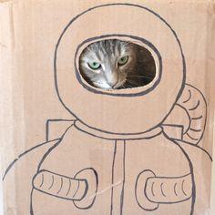 Astronaut Cat Portrait via a DIY Astronaut Cat Box!