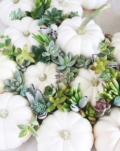 """if you haven't noticed, it's succulent pumpkin season! our long time """"succulent sister"""" @inspirelovely is selling the most gorgeous mini succulent topped pumpkins for just $12 (local pick up). check out her account for major inspiration!  also, a little psa for our north san diego county locals: @ranchovistanursery is hosting a succulent pumpkin workshop on october 15th! head over to their account for details!  photo by @inspirelovely"""