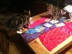 Luna's turn for Tea, signaling reading's end while Sam, jr. apprentice, hopes she leaves him a little