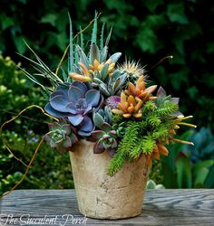 Beautiful potted arrangement of succulents