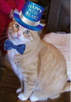 happy new year for more new years cats visit httpswww