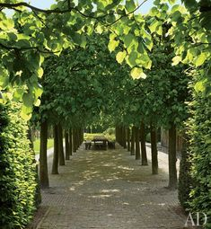 Linden trees shade a table for outdoor dining.