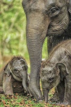 These adorable pictures of baby animals just born that we have collected will drive your love hormones high and you will start loving these cute animals Amazing Animals, Animals Beautiful, Cute Baby Animals, Animals And Pets, Nature Animals, Elefante Dumbo, Elephas Maximus, Elephant Love, Baby Elephants