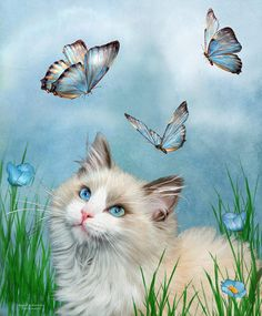 Ragdoll Kitty And Butterflies Mixed Media  - Ragdoll Kitty And Butterflies Fine Art Print