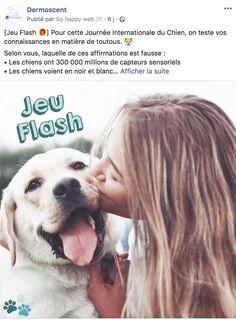 Devinette - Dermoscent Labrador Retriever, Dogs, Animals, International Dog Day, Starry Nights, Doggies, Calendar, Black N White, Labrador Retrievers