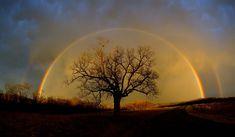 rainbow over elm tree