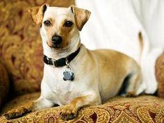 Dog Adoption - Petfinder