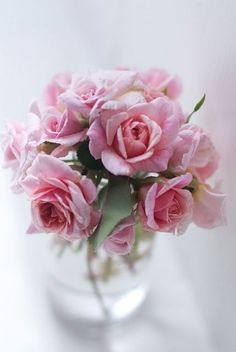 Find images and videos about pink, flowers and rose on We Heart It - the app to get lost in what you love. Love Rose, My Flower, Pretty Flowers, Fresh Flowers, Pink Flowers, Parfum Rose, Coming Up Roses, Colorful Roses, Rose Cottage