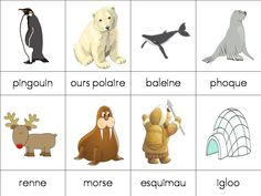 lamaterdeflo - lamaterdeflo nomenclature Plus Polar Animals, Animals For Kids, Winter Activities, Classroom Activities, Preschool Kindergarten, North Pole, Animal Party, Pre School, Montessori