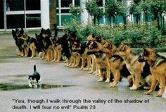 """Yea, though I walk through the valley of the shadow of death, I will fear no evil."" Psalm 23 / BIBLE IN MY LANGUAGE"