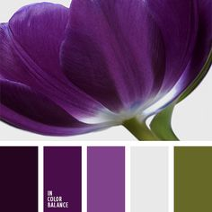 * MIddle purple  Bold Purple and Green Color Palette color.romanuke.com #1276