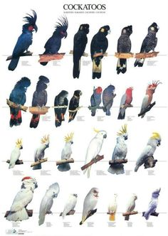 Nature Animals, Animals And Pets, Cute Animals, Types Of Pet Birds, African Lovebirds, Bird Breeds, Pet Bird Cage, Wild Animals Photography, Parrot Pet