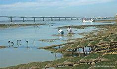 pont d'Oléron et ostréiculteurs
