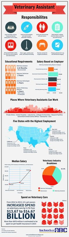 Infographic What Is A Veterinary Assistant Vet Med Pinterest