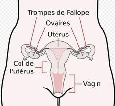 Dryness midwife vaginal