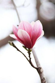 die 343 besten bilder von fr hlingsblumen in 2019 flower pictures flowers und photo wallpaper. Black Bedroom Furniture Sets. Home Design Ideas
