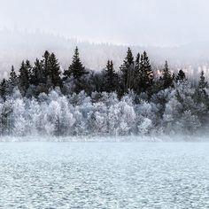 Winter countryside landscape. Frozen forest.