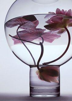 Peter Lippmann :: photographer :: WATER PLANTS 1 /                              …