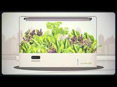 CounterCrop: The Modern Way to Grow Your Own Food by Jack Abbott —  Kickstarter