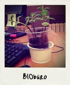 Nutzpflanzen im Büro