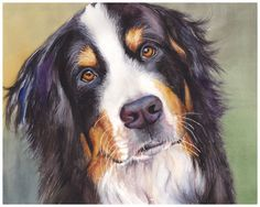 "Bernese Mountain Dog Watercolor Giclee Fine Art Print 8x10"" [Watercolor Dog Portrait, Dog Print, Dog Wall Decor, Dog Art, Dog Painting]"