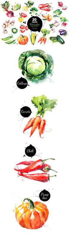 The Versatile Vector Collection vegetables watercolor Watercolor Fruit, Watercolor Drawing, Watercolor Illustration, Painting & Drawing, Watercolor Paintings, Watercolours, Vegetable Drawing, Food Painting, Guache