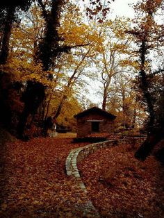Autumn in Pelion Greece Ancient Greek Theatre, Santorini Villas, Myconos, Greek Flowers, Forest Mountain, Going On Holiday, Tree Forest, Ancient Ruins, Medieval Castle