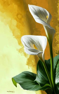 Flower Painting Discover Calla lily by Thanh Thuy Nguyen Calla Lily Digital Art - Calla Lily Fine Art Print Lily Painting, Flower Painting Canvas, Watercolor Flowers, Watercolor Paintings, Easy Canvas Art, Wow Art, Calla Lilies, Flower Art, Art Prints