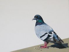 Harriet, original painting of a pigeon acrylic on canvas(example only, not for sale at this time) by albertinebelle on Etsy Pigeon Logo, Animal Paintings, Bird Paintings, Crazy Bird, Baby Goats, Bird Pictures, Cool Art, Bird Lady, Original Paintings